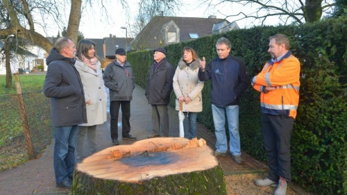 Ärger um eine gefällte alte Esche in Millingen | NRZ.de | Emmerich Rees Isselburg